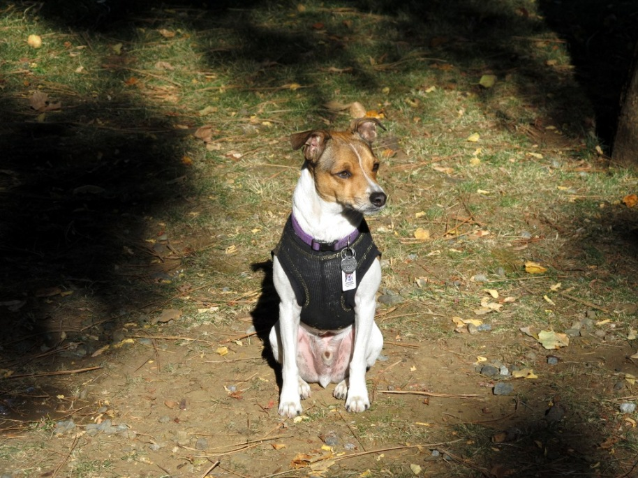 Louie Waits